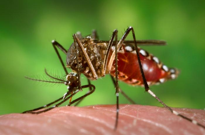 ABNORMAL. The Provincial Health Office cited an abnormal increase in the number of dengue cases in the province in declaring an outbreak.
